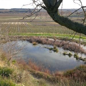 Une mare dans les vignes
