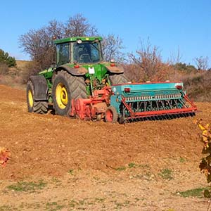 Semance de blé tendre sur les vignes de l'Arjolle