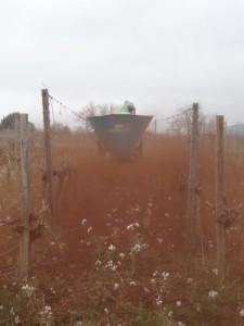 Essai du Biochar sur nos sols